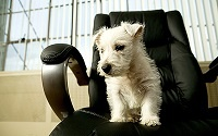 small dog in chair